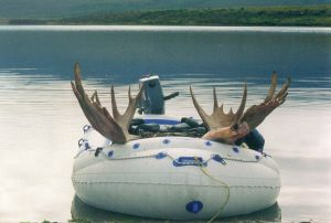 moose8